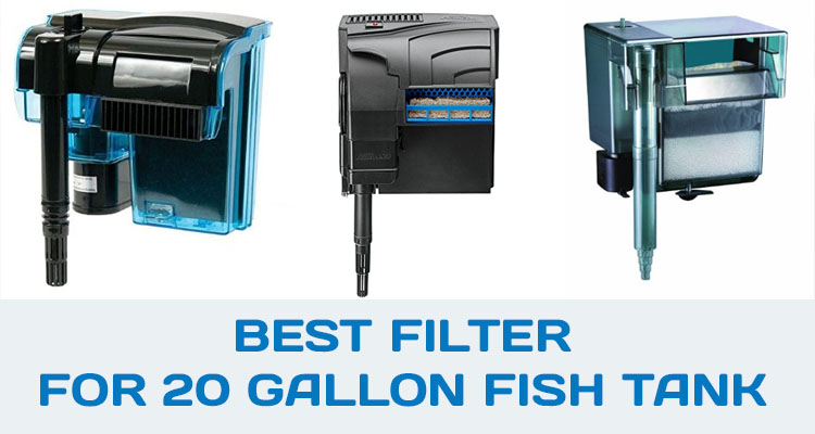 Best Filter For 20 Gallon Fish Tank