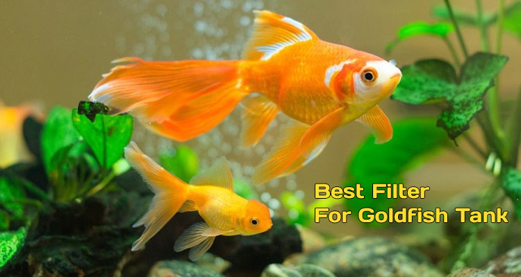 Best Filter For Goldfish Tank