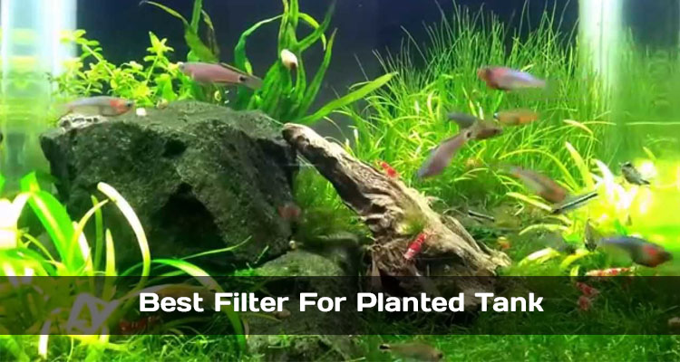 Best Filter For Planted Tank