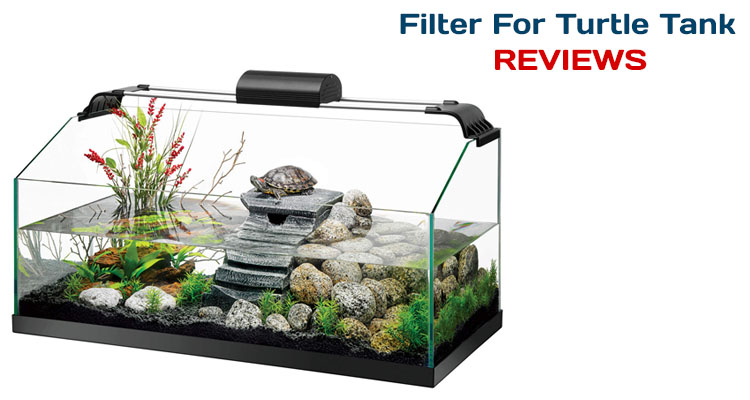 Image result for filters for turtle tank