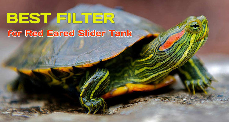Best Filter for Red Eared Slider Turtle Tank