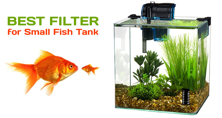 Best Filter for Small Fish Tank