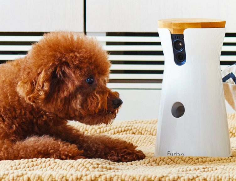 Best Pet/Dog/Cat Cameras - The Top Rated Models Reviewed