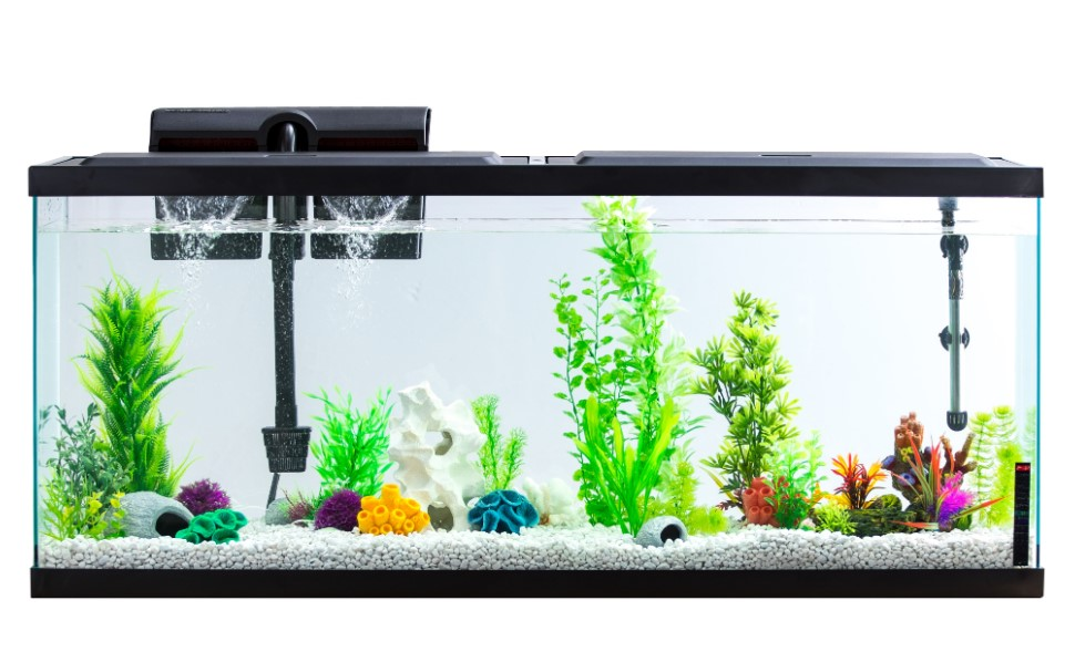 Fundamental Things You Need when Shopping for a Fish Tank
