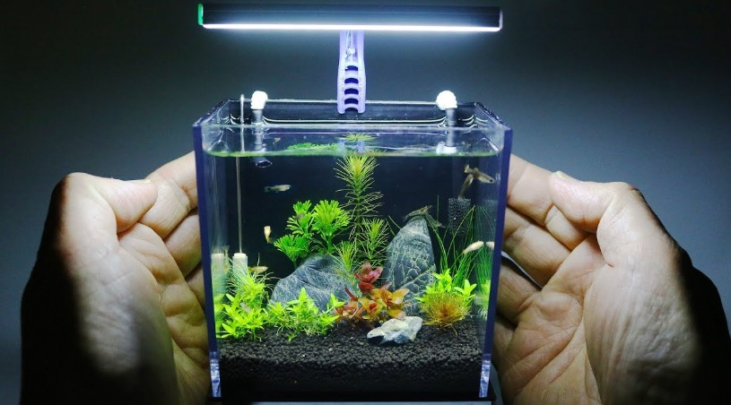 Large vs. small fish tank