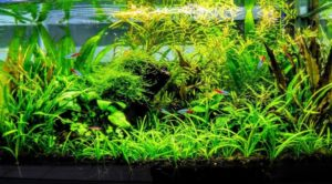 Planted Aquariums- The Filtration Problems to Consider
