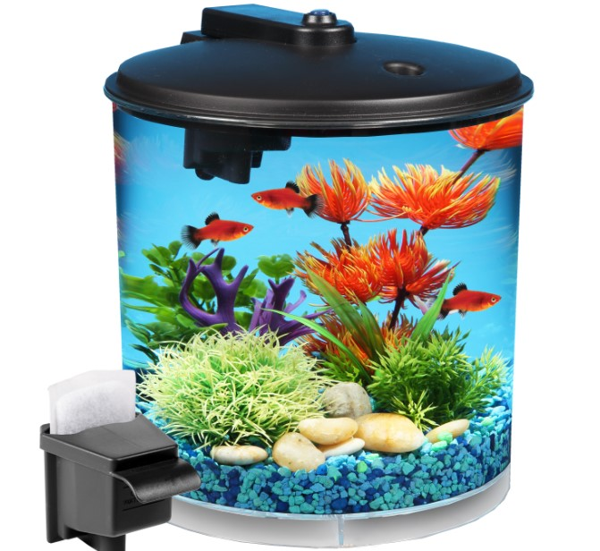 Small Fish Tanks- When and Why Choose One