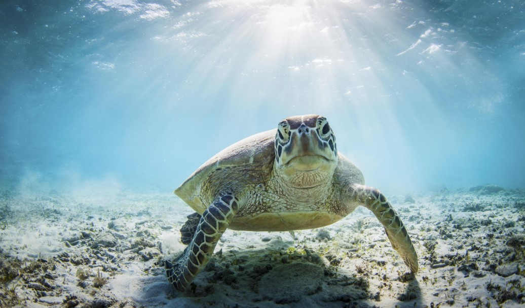 The Fundamental Things That Any Future Turtle Owner Should Know