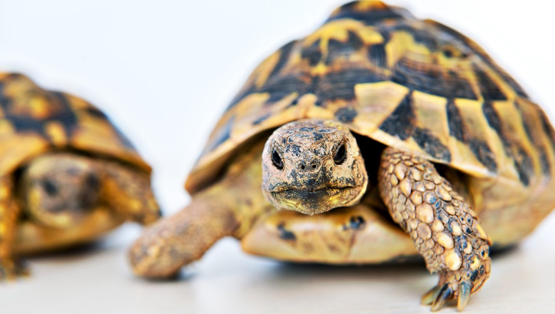 Turtle, Tortoise, Box Turtle - Here's How You Know if You're Ready for Any of Them