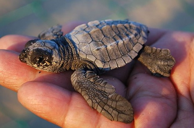 Turtles As Pets- Here's What You Ought To Know Before Getting One