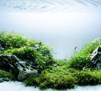 Best Substrate for Planted Aquarium