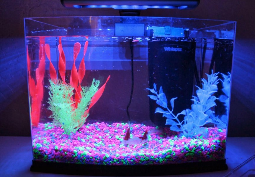 aquarium with LED lights for fish