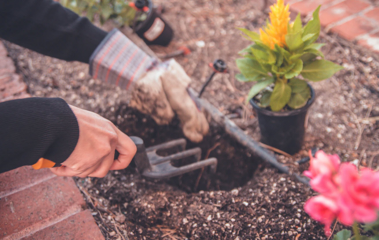 Tools You Need In Gardening